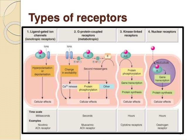 types of receptors.jpg