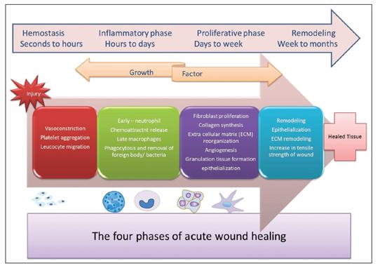 wound healing 2